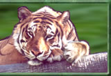 Wildlife Embroidery Gifts by Vodmochka Graffix award winning Embroidery Designer