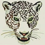 Jaguar -Leopard Portrait #2- Click to Enlarge - Dimensions: (500X501) File Size: 55KB